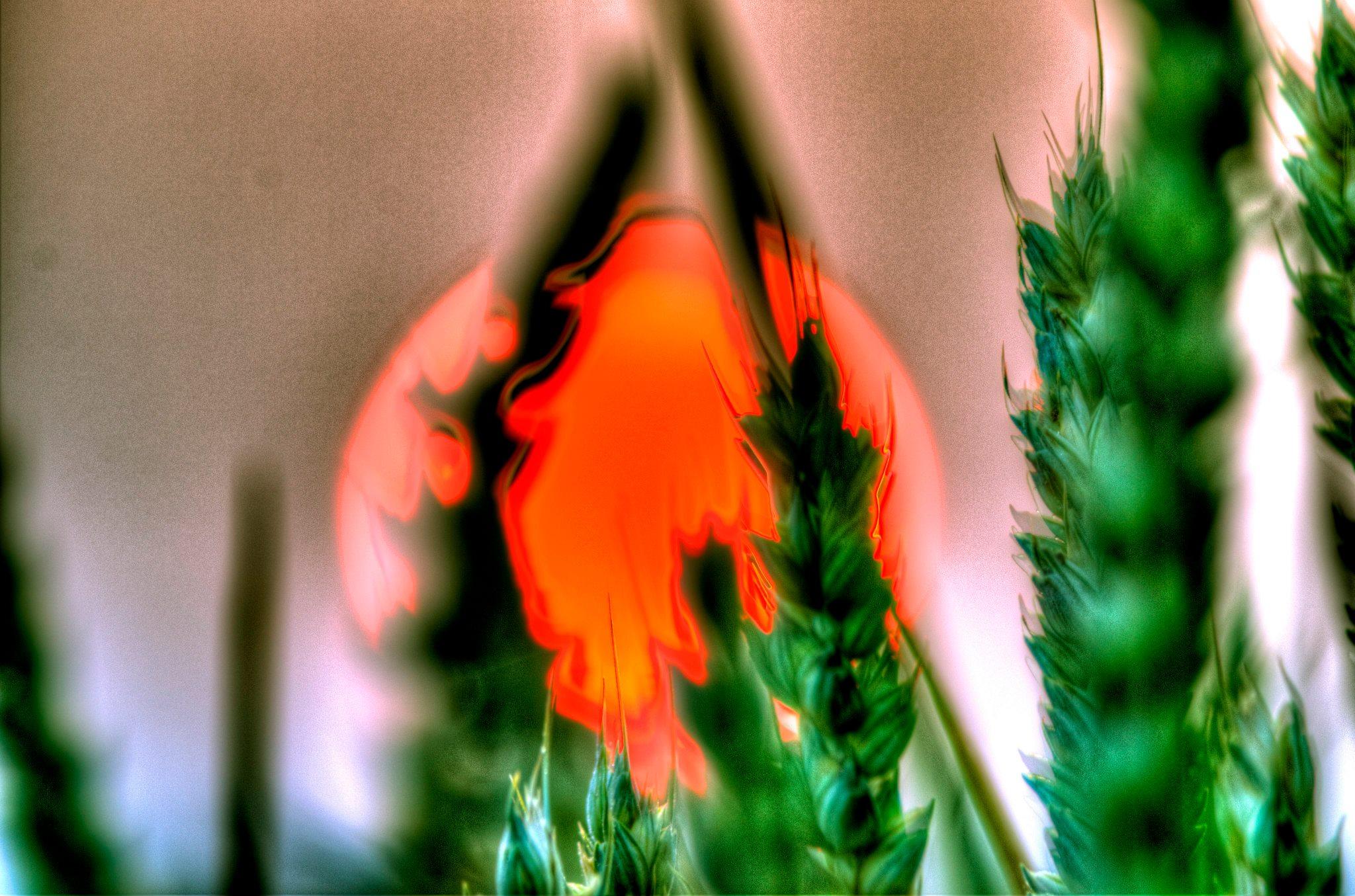 Събуждане на чакрите: Йога-нидра за вътрешен баланс и преход към нови енергийни честоти