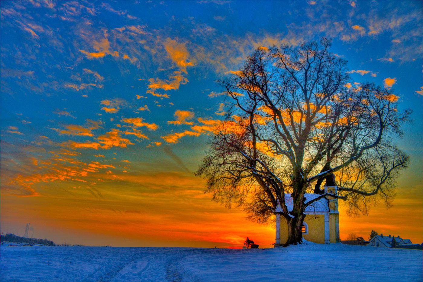 Дървото беше мост към вечноста; мост, по който да премина във всеки момент, в който съм се загубил - за да вляза във връзка със силата на корена - и на неизкоренимия, неукротимия, неуморимия стремеж към висините. Да намеря пътя обратно към енергийното пространство, където принадлежим като човешки същества - в непостоянното равновесие и непрестанното движение на границата между земята и небето.
